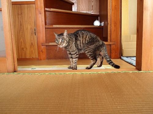 腰を曲げる猫