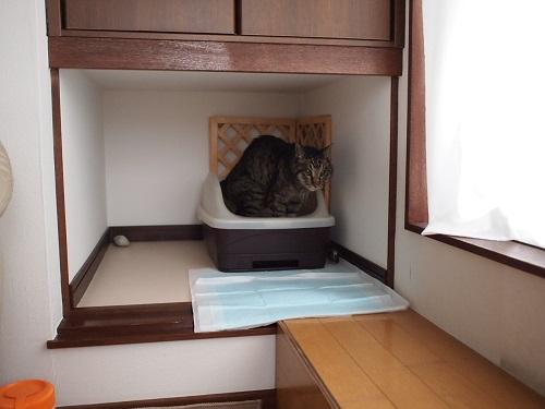 トイレへ行く猫