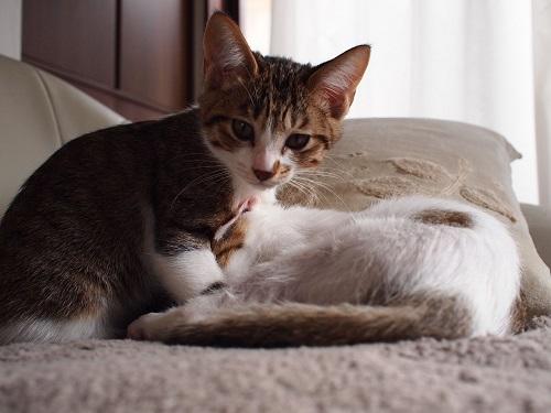 猫の動物病院選び