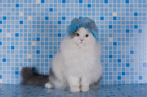 シャワーキャップをかぶった猫