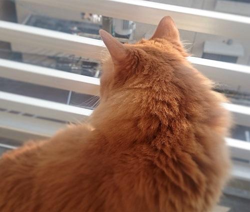 外に出る猫