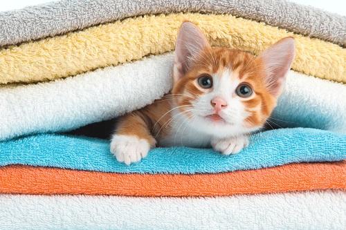 タオルに挟まる子猫