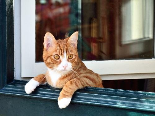 ドアから顔をだす猫