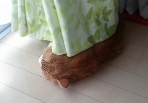 ゴロゴロする猫