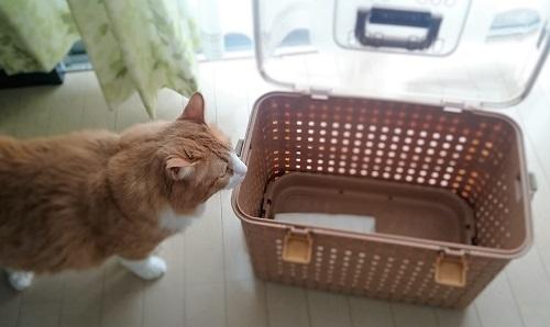 猫を入れるカゴ