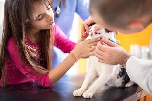病院で治療する猫
