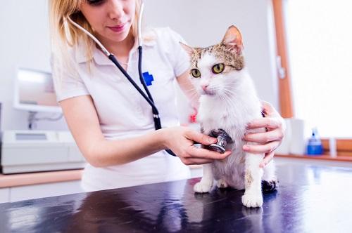 猫の避妊手術