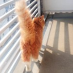 ベランダを歩く猫