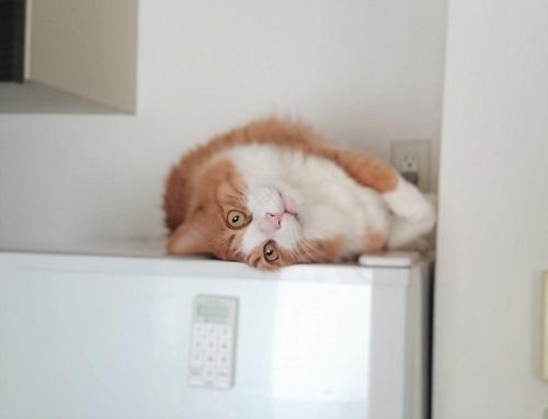 高い塀で寝る猫