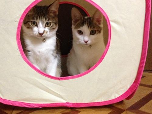 テントの中にいる猫