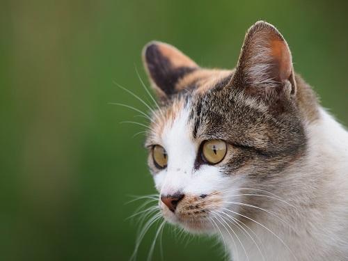 髭の生えた猫