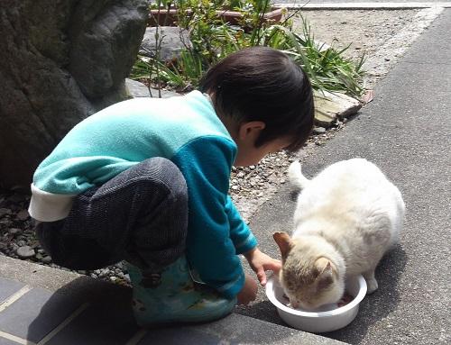 ペット猫の床対策!フローリング や畳は注意が必 …