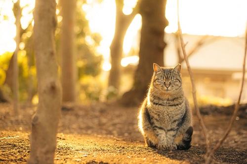 夕日の中にいる猫