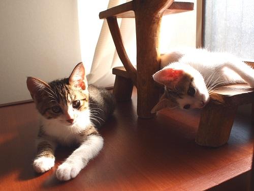 かわいい猫2匹