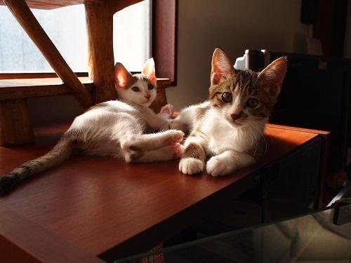 家でのんびする猫