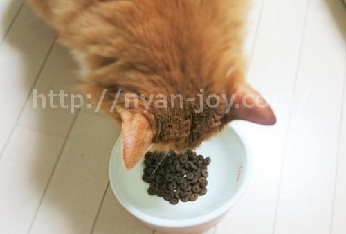 ジャガーを食べる猫