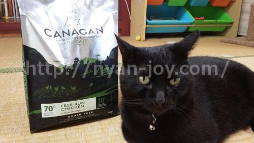カナガンキャットフードと愛猫