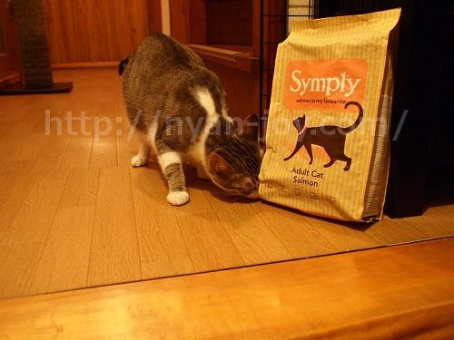 シンプリーの匂いをかぐ猫