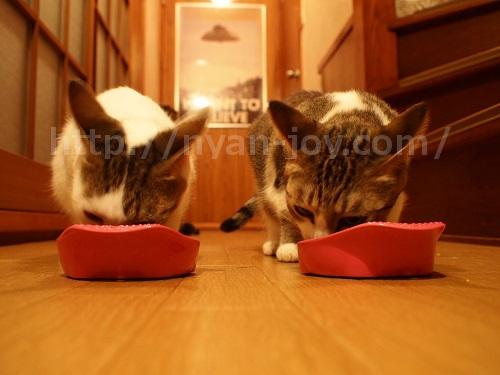シンプリー食べる猫