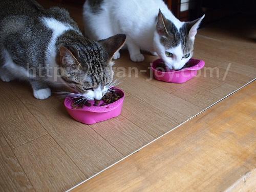 シンプリーを美味しそうに食べる猫