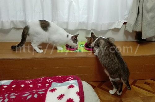 シンプリーが大好きな猫