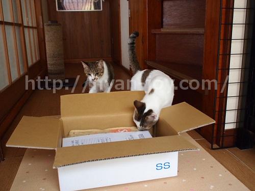 シンプリーが届いた時の猫の反応