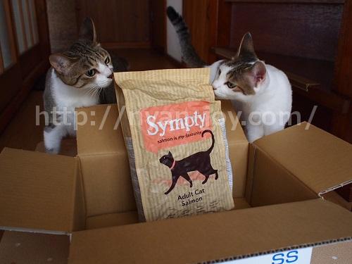 シンプリーを喜ぶ猫