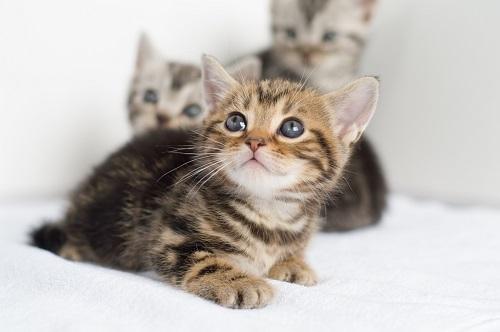 つぶらな目の猫