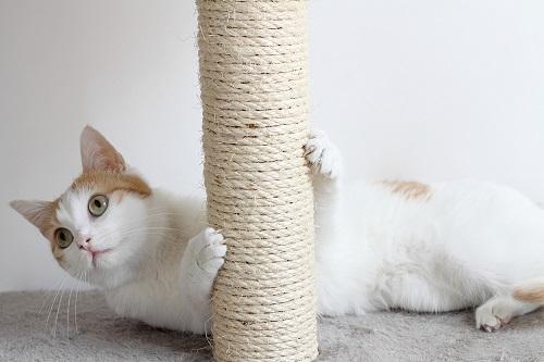爪とぎする猫