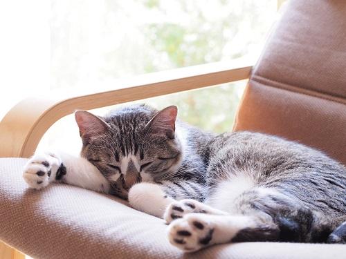 猫の体温調整