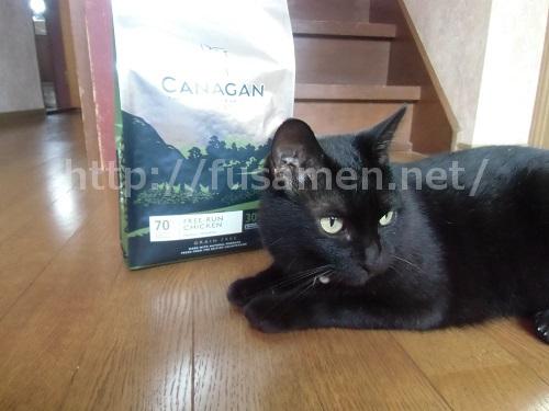 カナガンキャットフードと猫