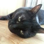 ストレスを感じる猫
