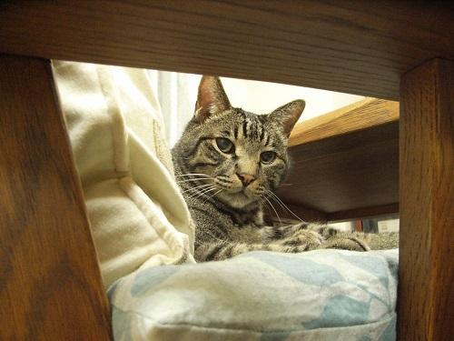 チラッと見る猫