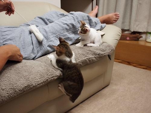 猫のやきもち