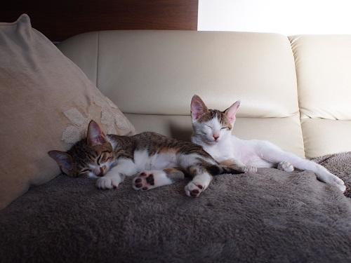 かわいい2匹の猫