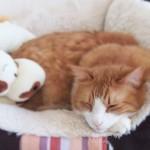 猫の防寒対策