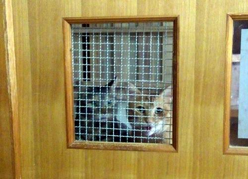 4匹の猫の共同生活