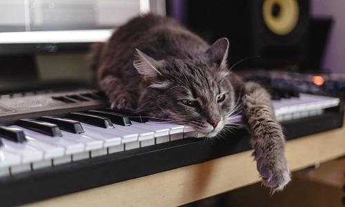 ピアノにのる猫