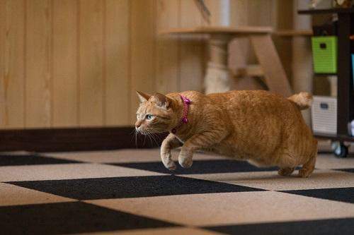 獲物をみつけた猫