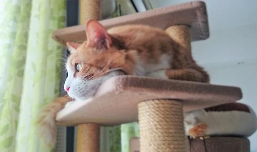 キャットタワーに上る猫