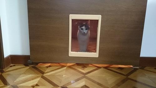 猫ドアから見える猫