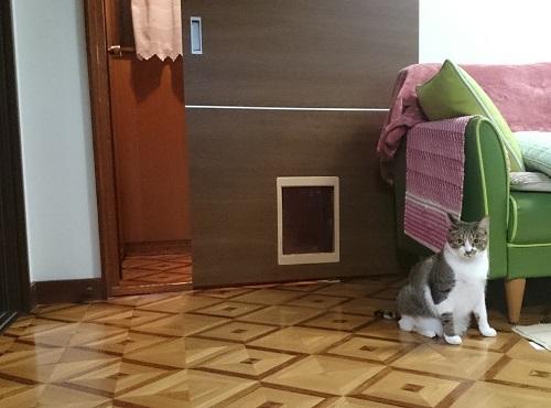 リフォームした猫のドア