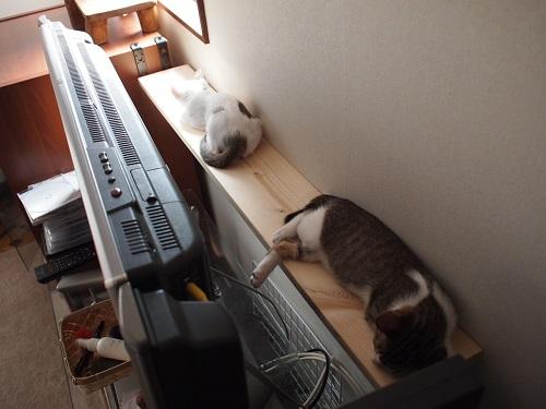 テレビの裏で寝る猫