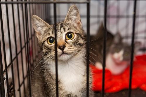 檻に入った猫
