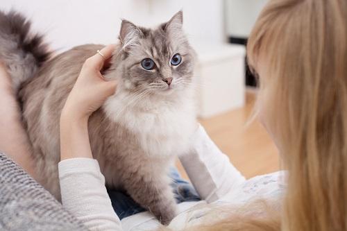 猫と指輪の女性