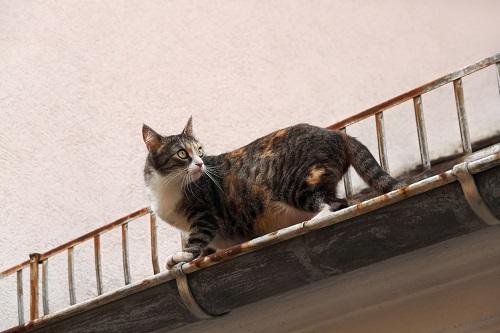 屋根を歩く猫