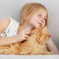 猫をなでる少女