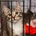 檻の中にいる猫
