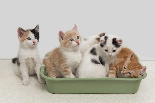 トイレをする子猫