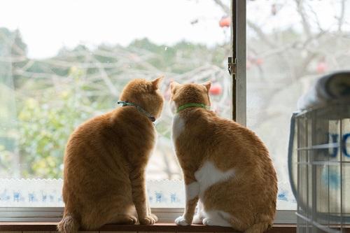 窓辺に眺める猫